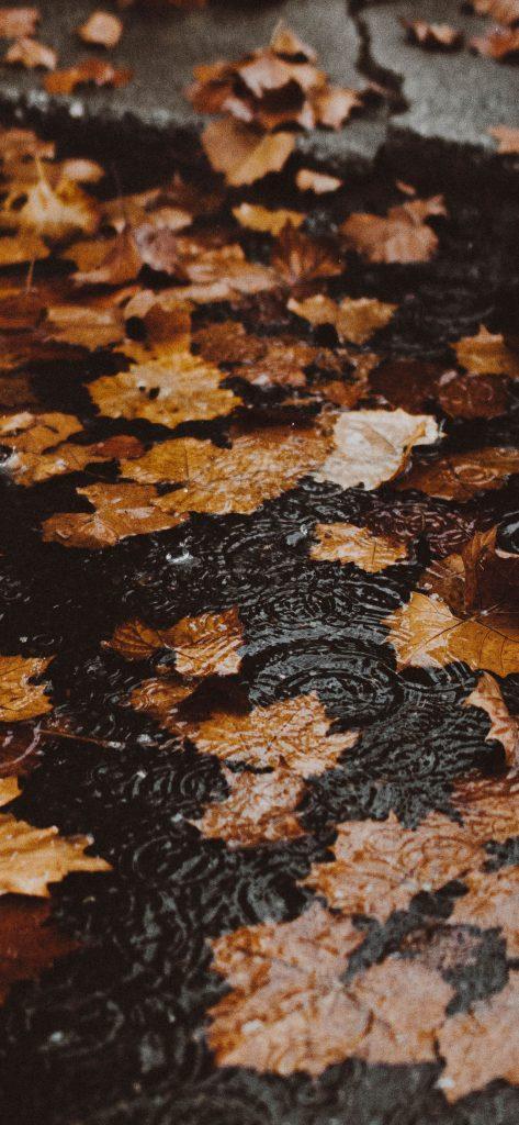 Autumn-iPhone-wallpaper-1125-×-2436