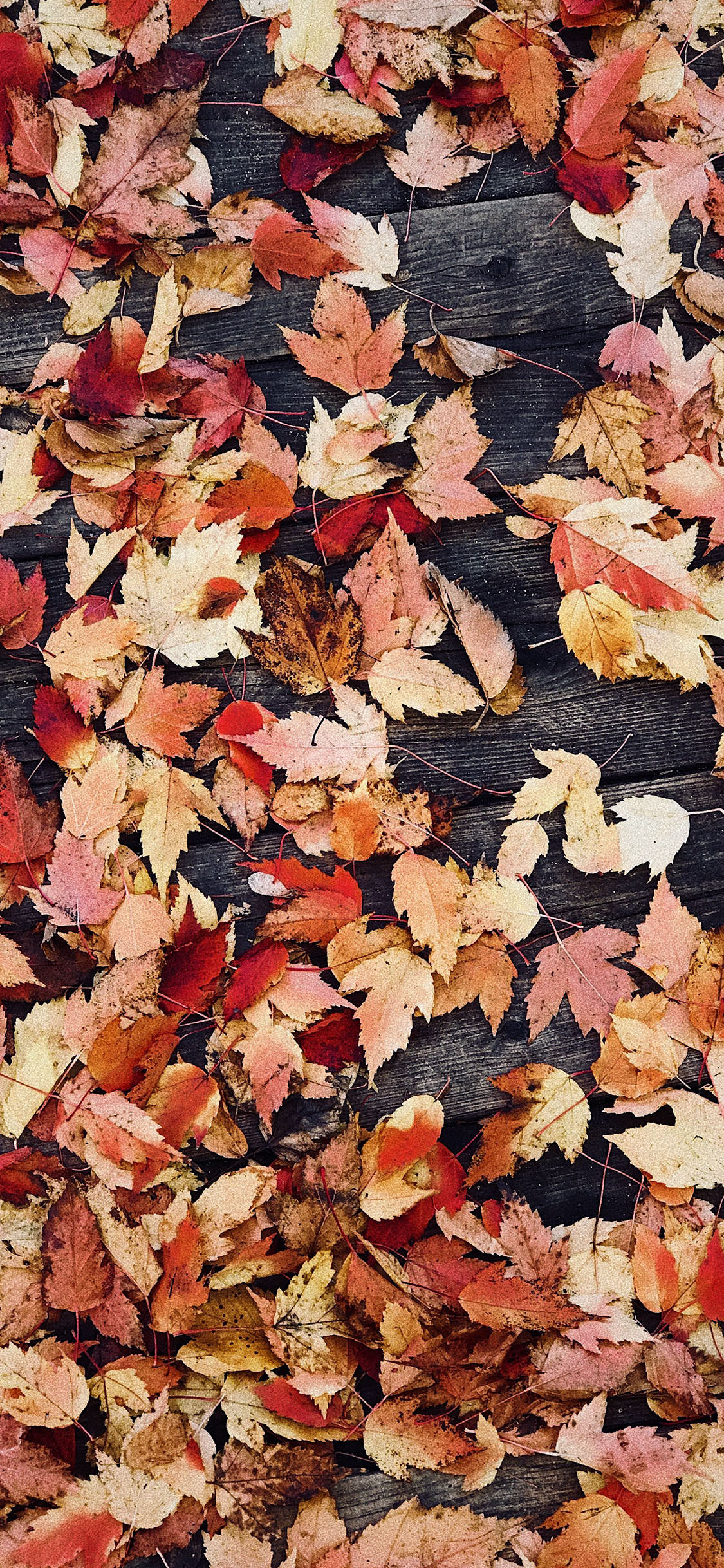 32 Best Autumn Iphone Wallpapers Templatefor