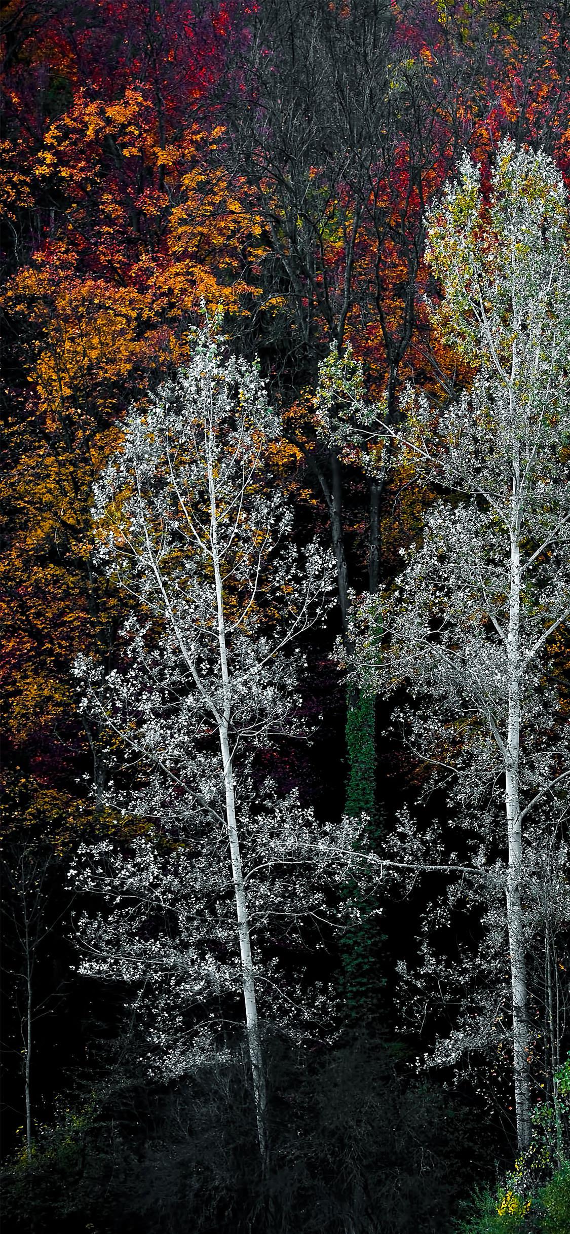 foto de 32+ Best Autumn iPhone Wallpapers - Templatefor