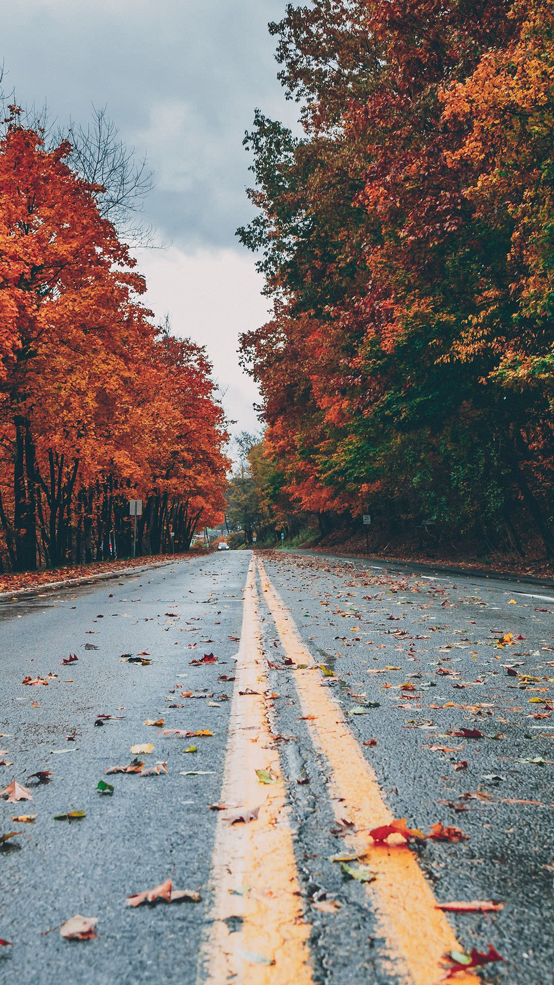 35+ Best Autumn iPhone Wallpapers - Templatefor
