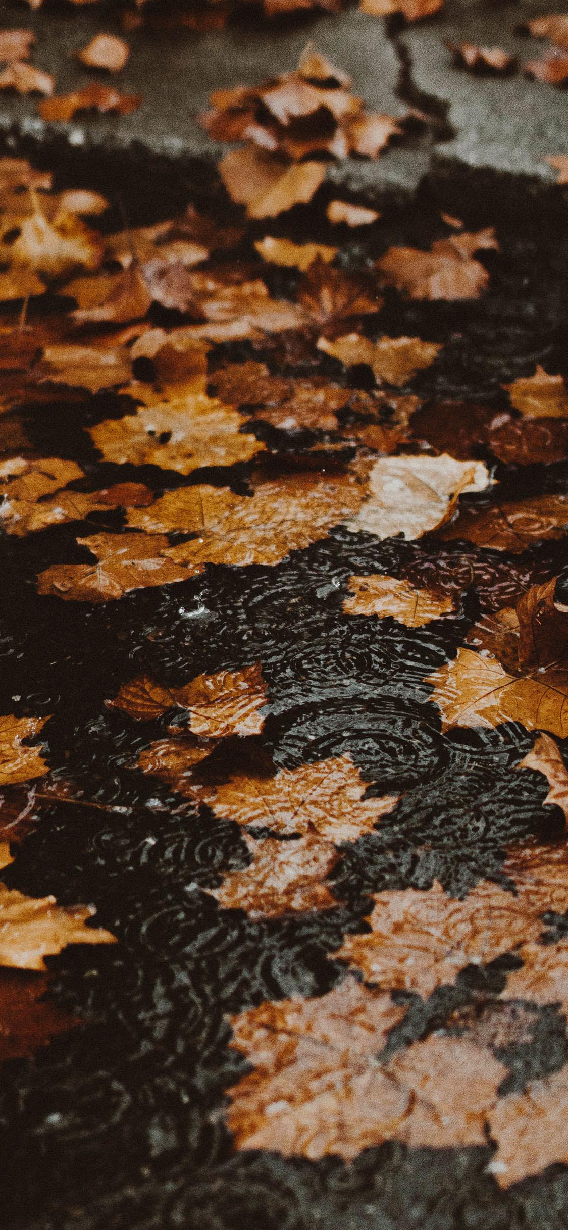 32+ Best Autumn iPhone Wallpapers , Templatefor