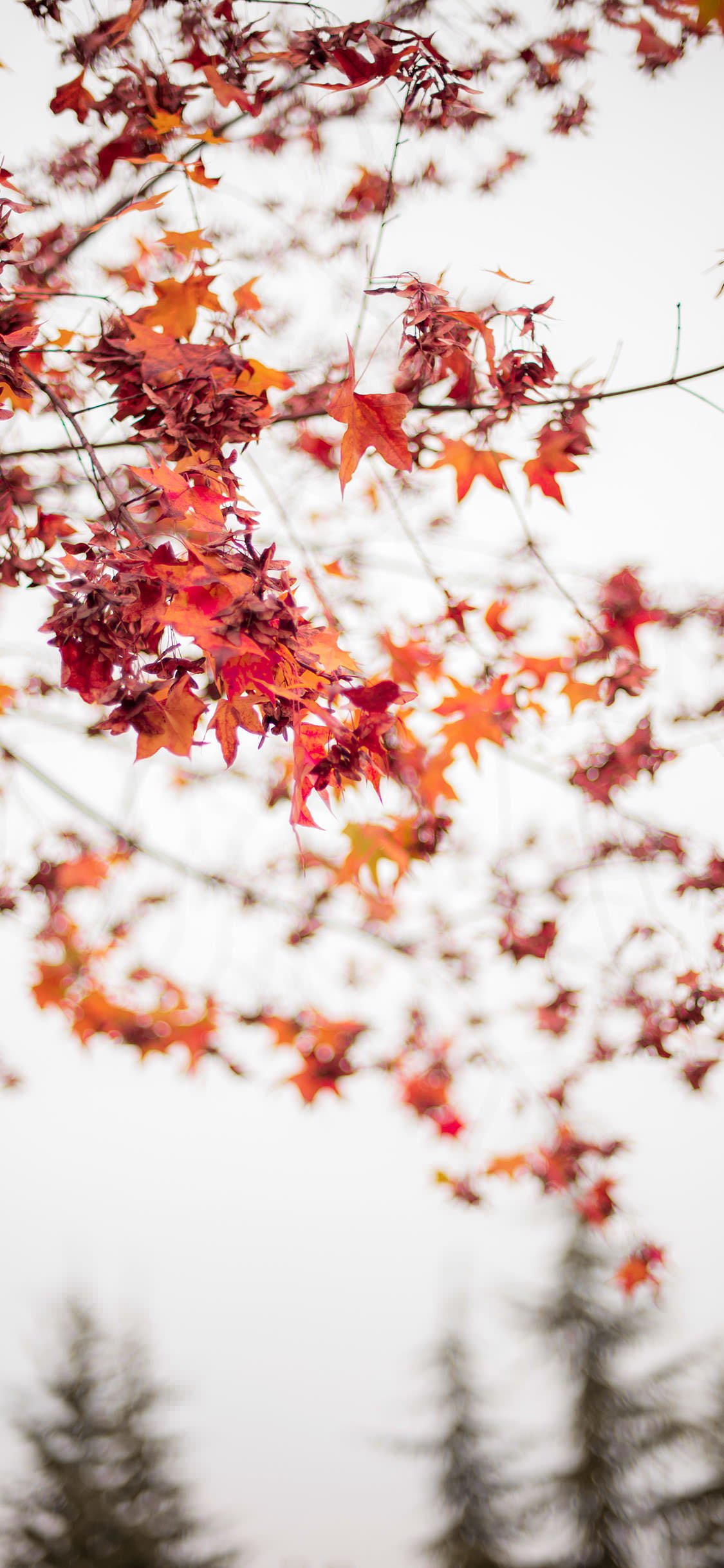 35 Best Autumn Iphone Wallpapers Templatefor