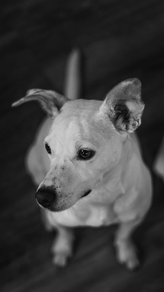 Dog black and white iphone wallpaper 1080×1920