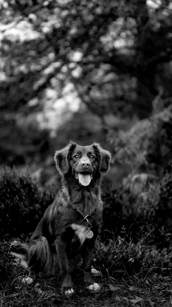 black and white Cute Dog 1080×1920