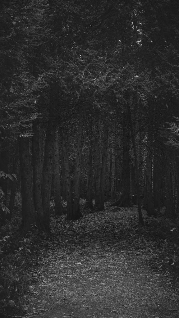 black and white Forest iphone wallpaper 1080×1920