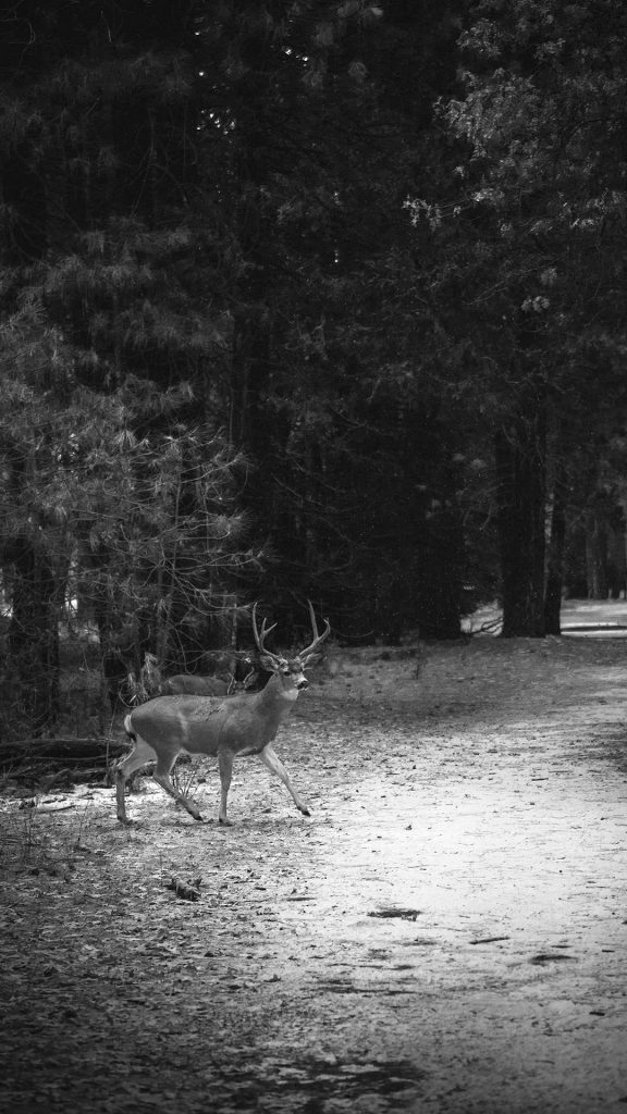 deer black and white iphone wallpaper 1080×1920