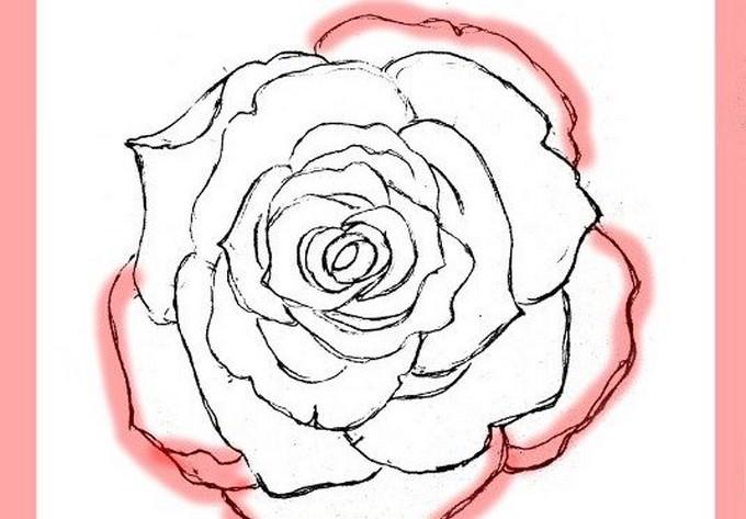 Draw Roses