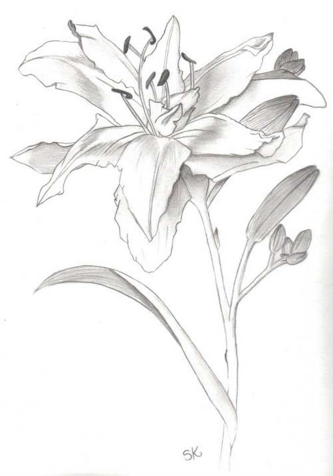 Flower Drawing # 2