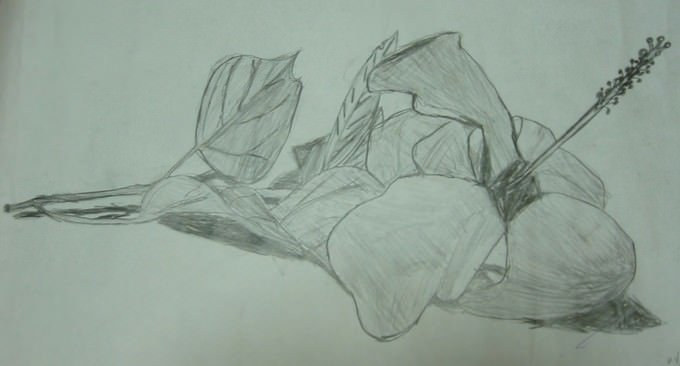 Flower First Drawing