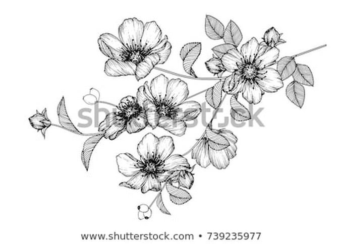 Flowers Drawing With Line