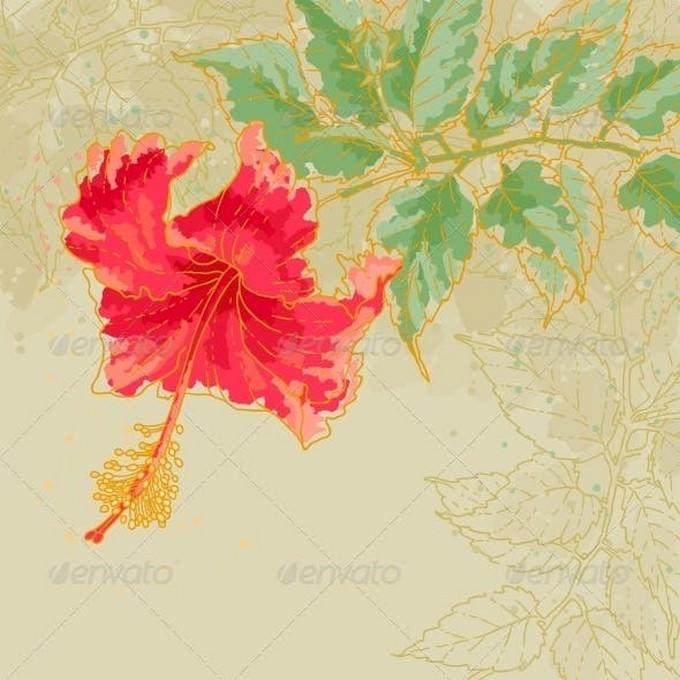 Hibiscus Flower on Toned Background