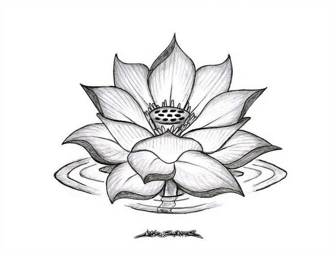 Lotus Flower Drawing Download
