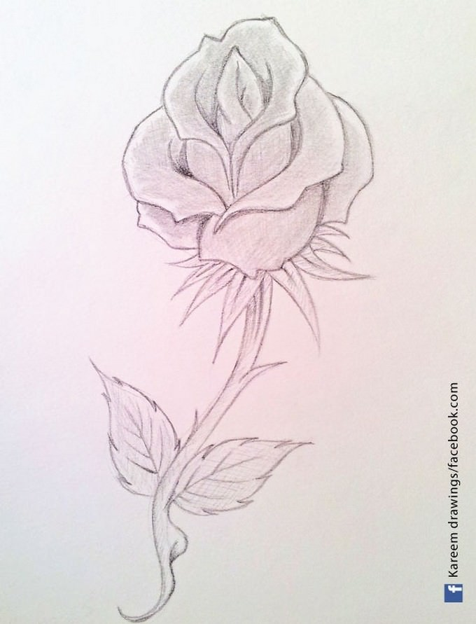 My Rose Drawing