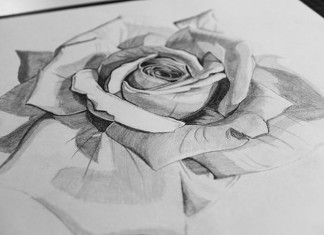 Realistic Rose Sketch Drawing