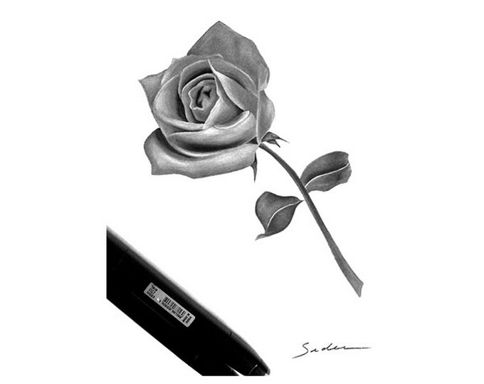 Rose Drawing # 2