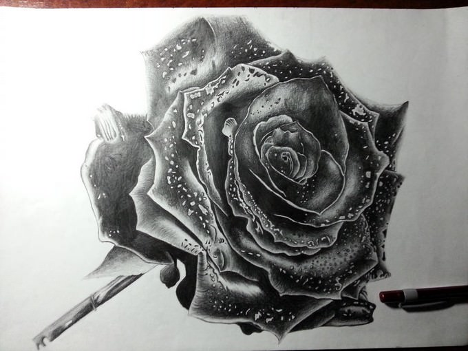 Rose Drawing By DeadArt1