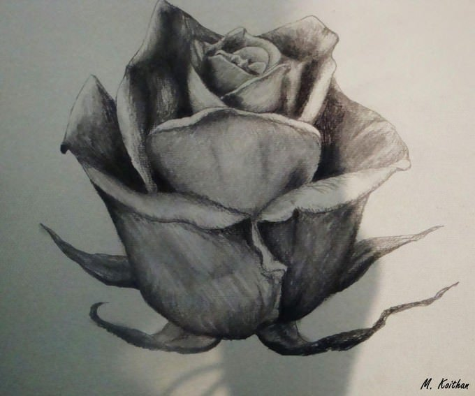 Rose Drawing by xdrawingsx