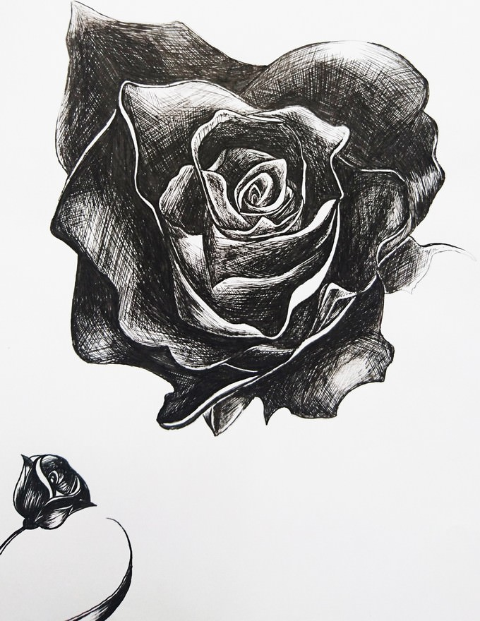 Roses Are Red Drawing