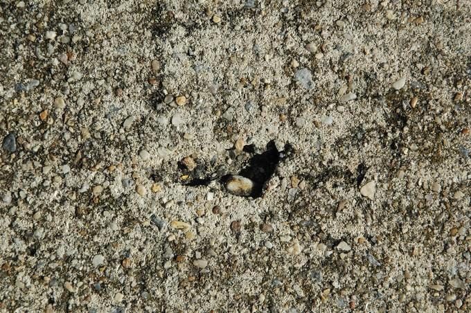 Stone Free Texture # 2