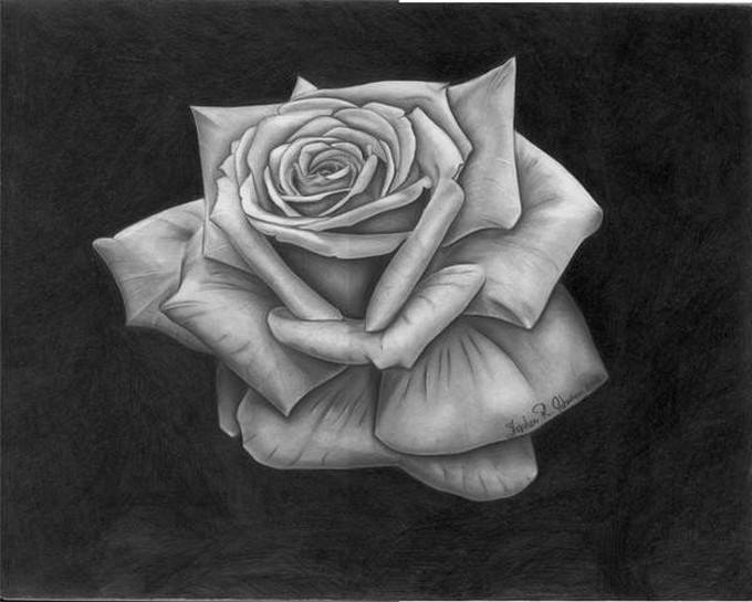 The Rose - Final Drawing
