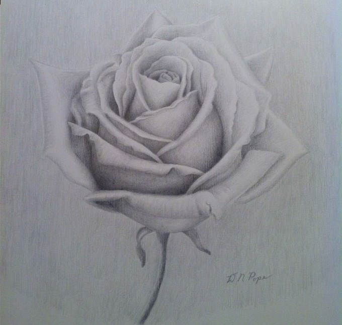 White Rose Silverpoint Drawing