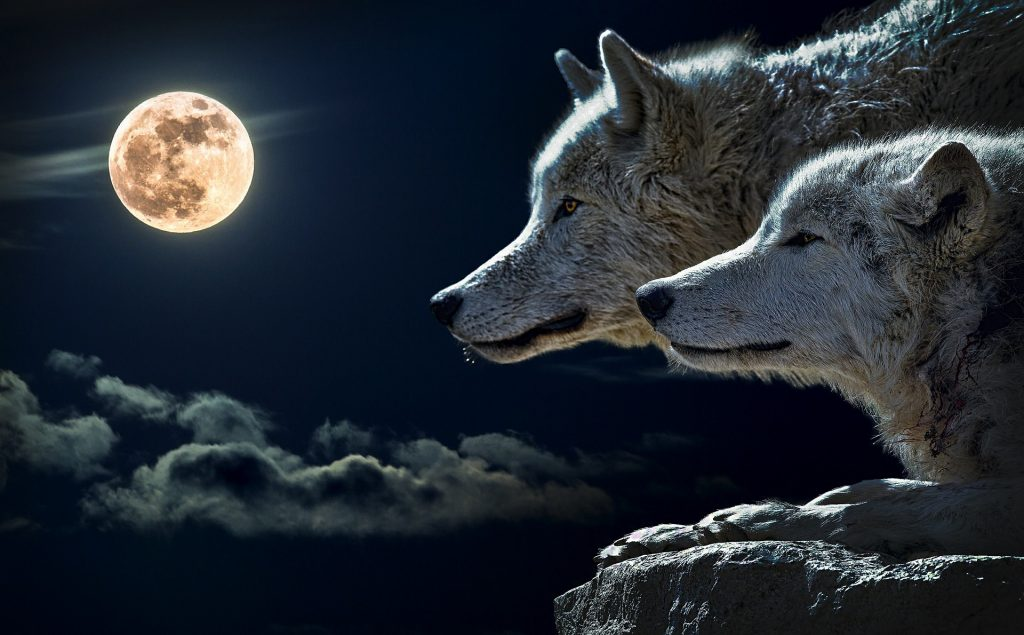 Moon, Wolf Background and Wallpaper-0004-1920 × 1190