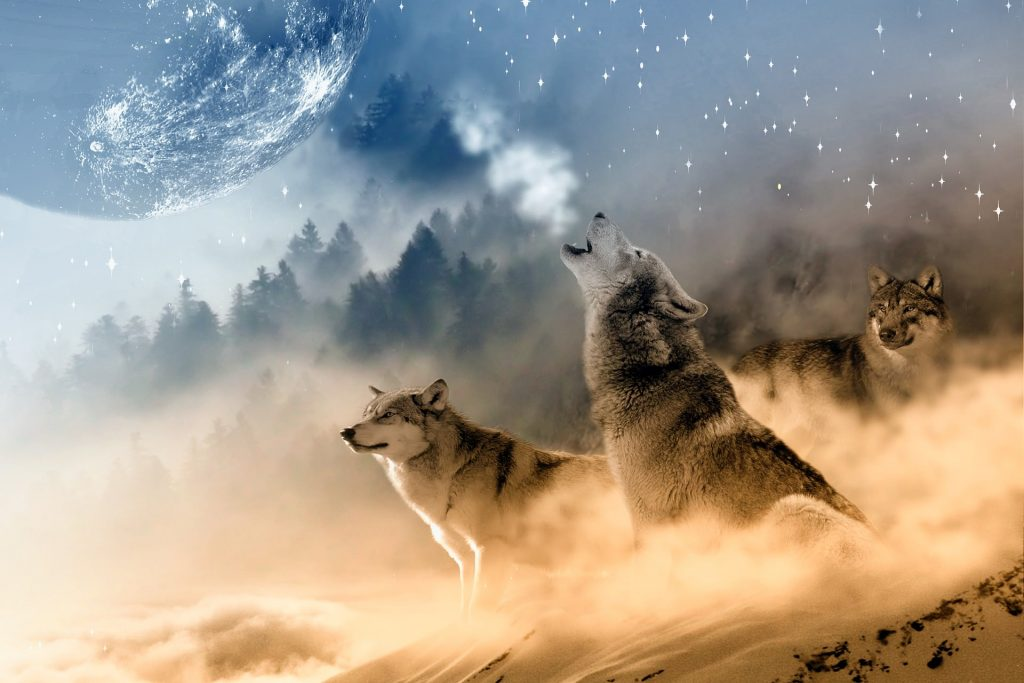 Roar, Star Wolf HD Wallpapers-0025-1920 × 1280