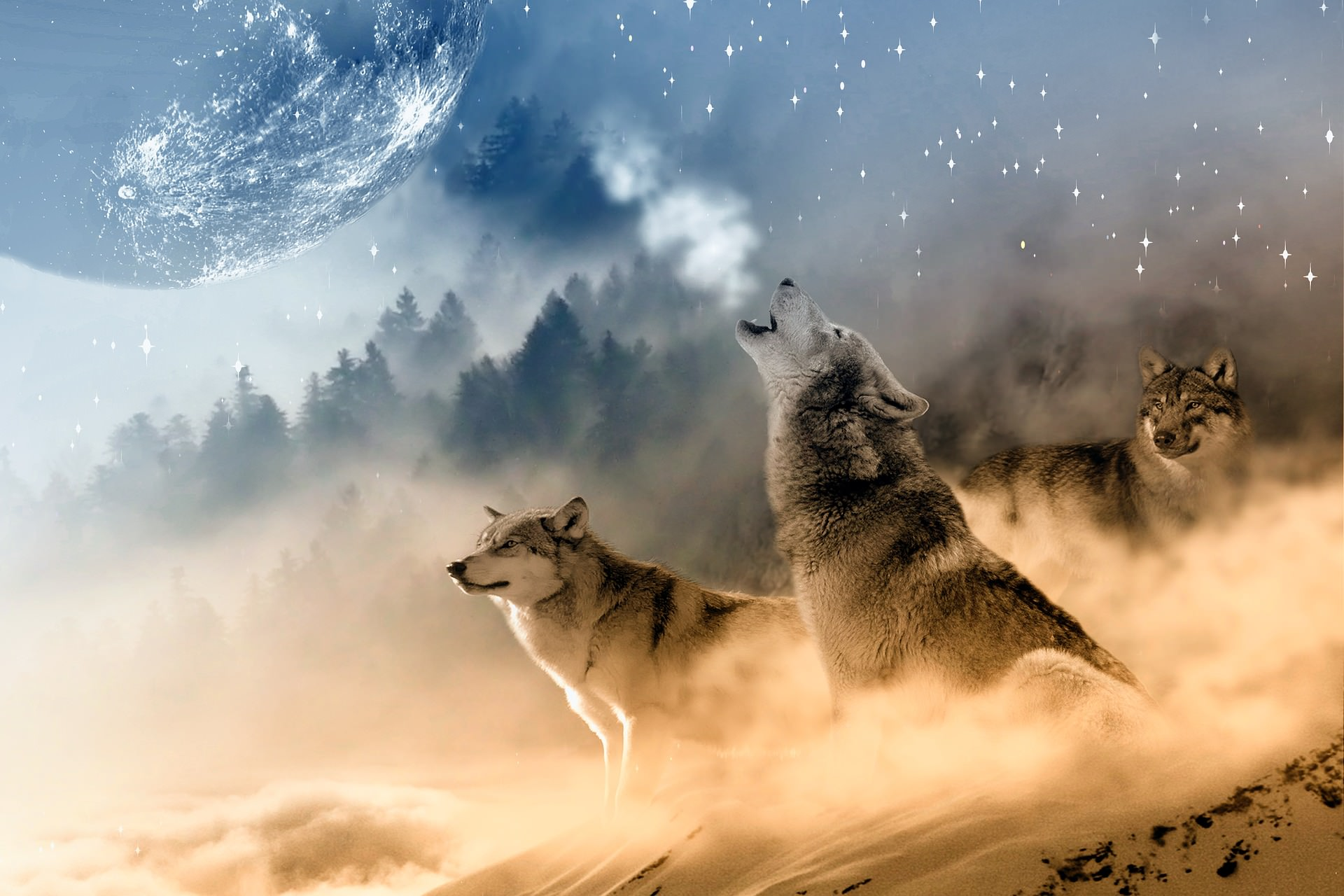 23 Amazing Wolf Backgrounds Wallpapers Templatefor