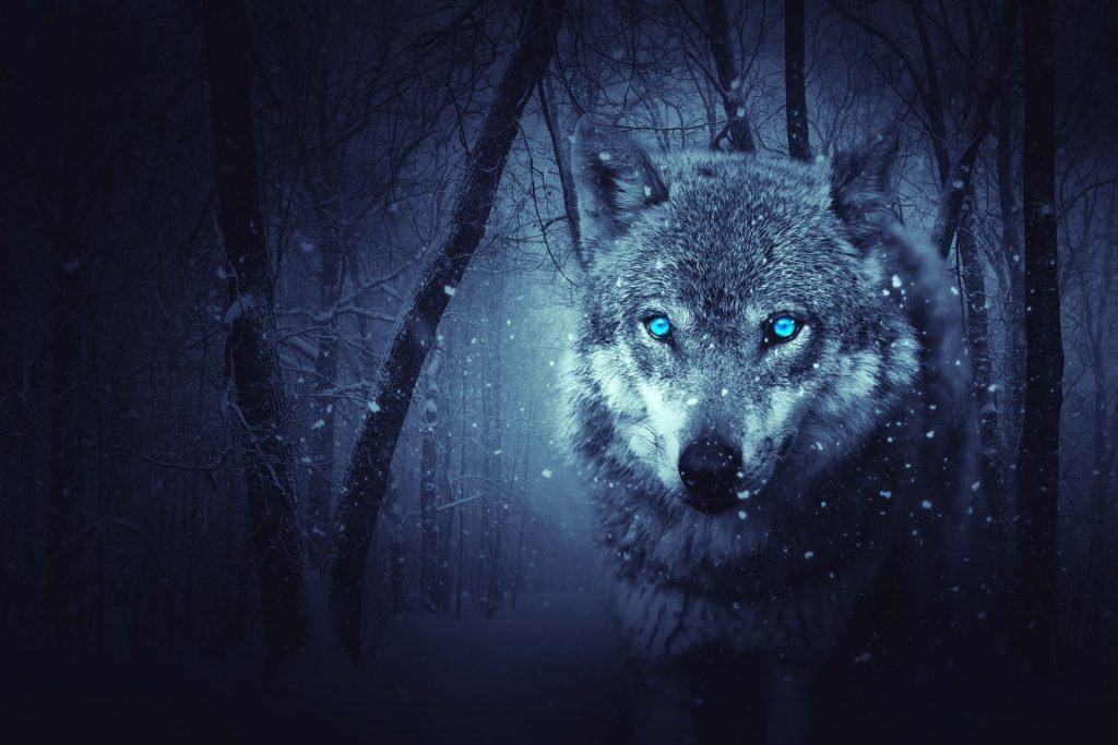 Beautiful Effect Wolf HQ Wallpapers-0026-1920 × 1280