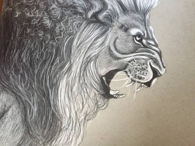 Lion Charcoal Drawing