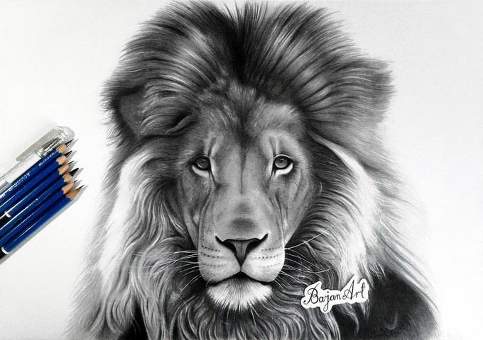 Lion Drawing Based on The Pic