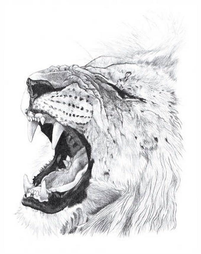 Lion Graphite Pencil Drawing