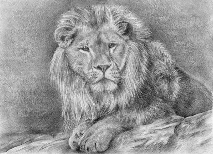 Lion KingDrawing
