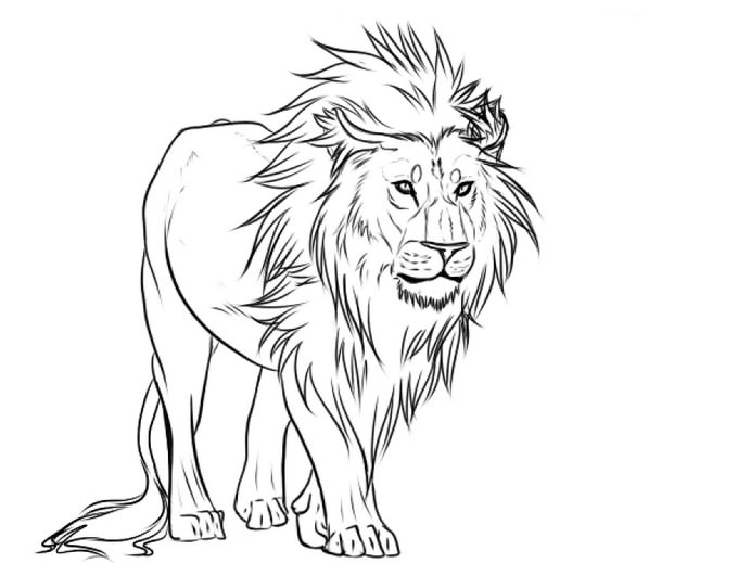 Lion Lines Drawing