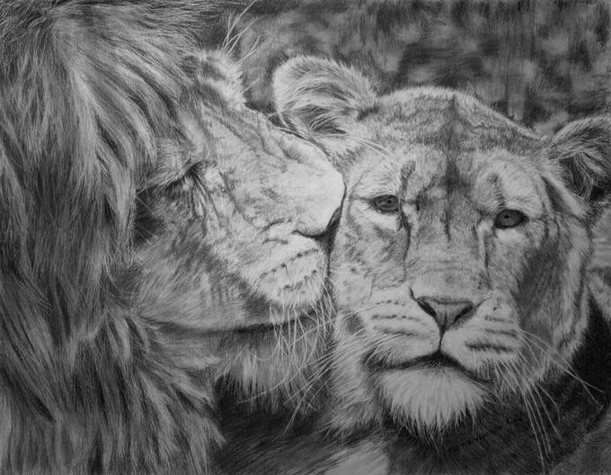 Lion Love Drawing