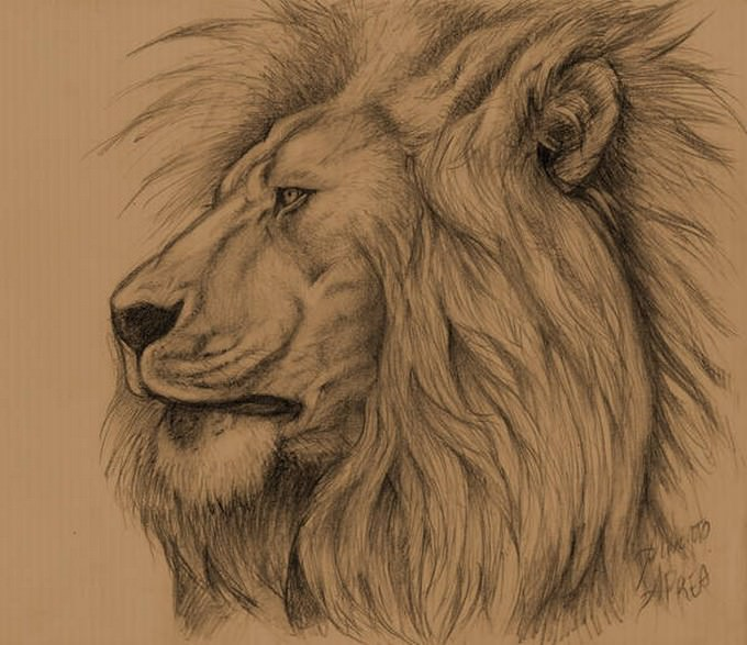 lion Sketch Drawing