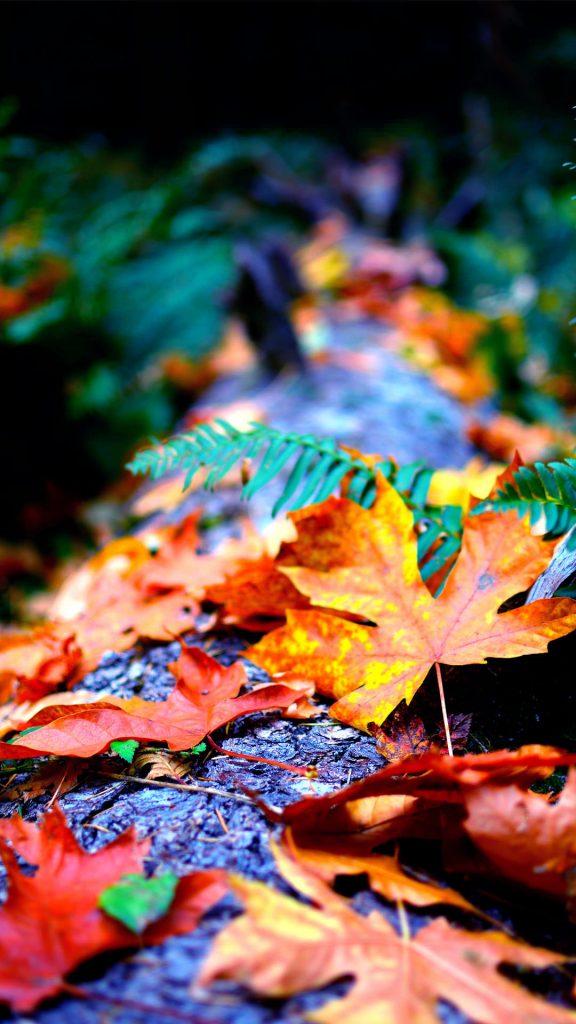 Autumn Blur Close up ios HD Wallpaper-1080x1920