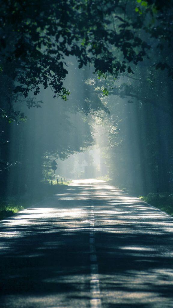 HQ Dark Forest Road ios Wallpaper-1080x1920