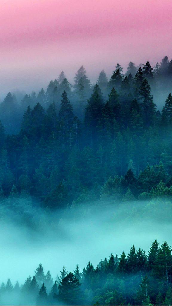 foggy forest ios HQ Wallpaper-1080x1920