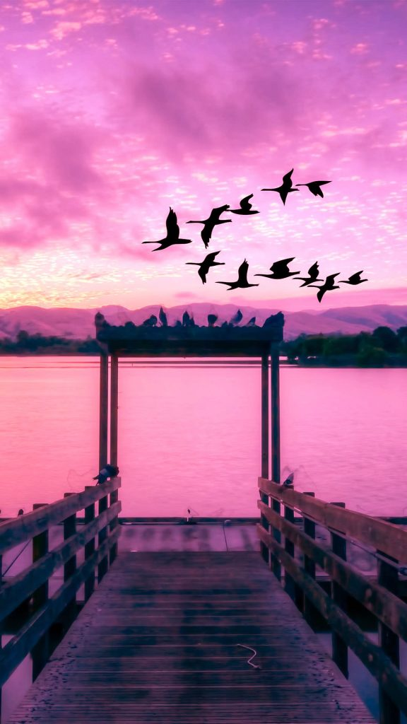 lakeview sunset and flying Birds-1080x1920