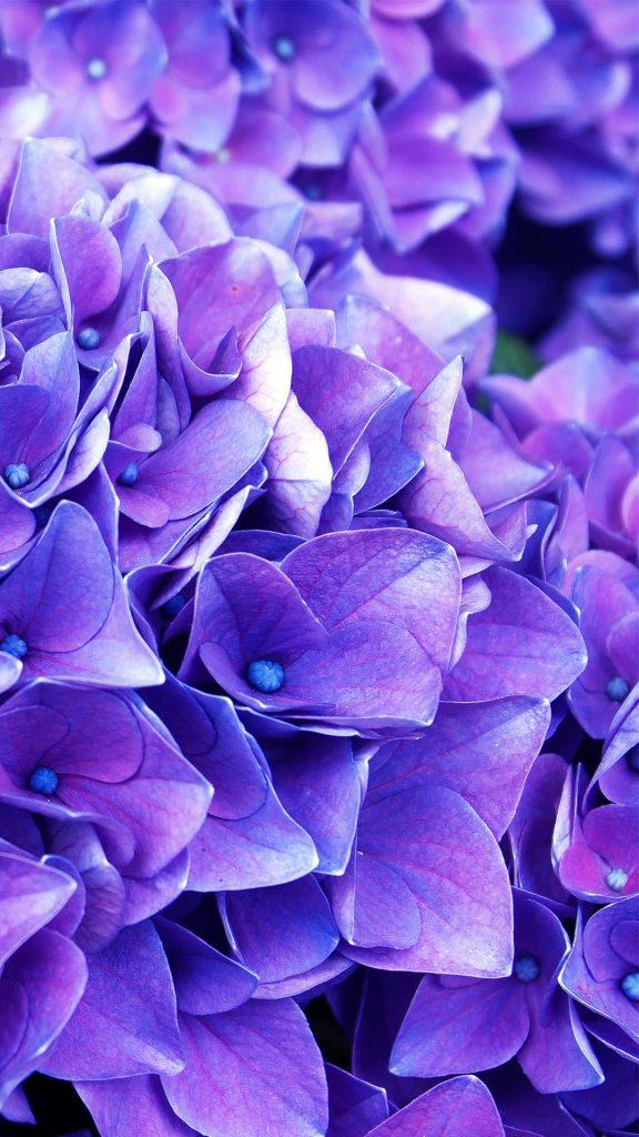 lilac flowers ios high quality wallpaper-1080x1920