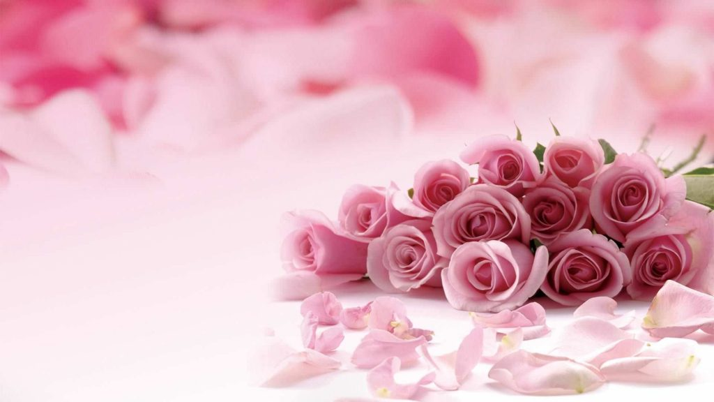 Blur Rose Pink Girly Background