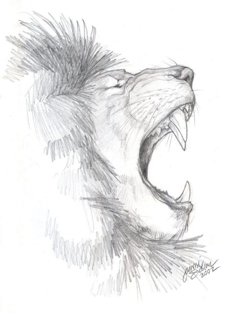 African Lion Sketch