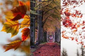 35+ Best Autumn iPhone Wallpapers