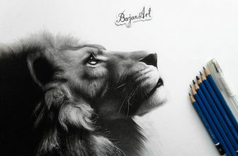24+ Best Lion Drawings Templates 2020