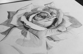 25+ Best Rose Drawings – PSD, EPS, AI Format